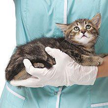 Консультация ветеринара